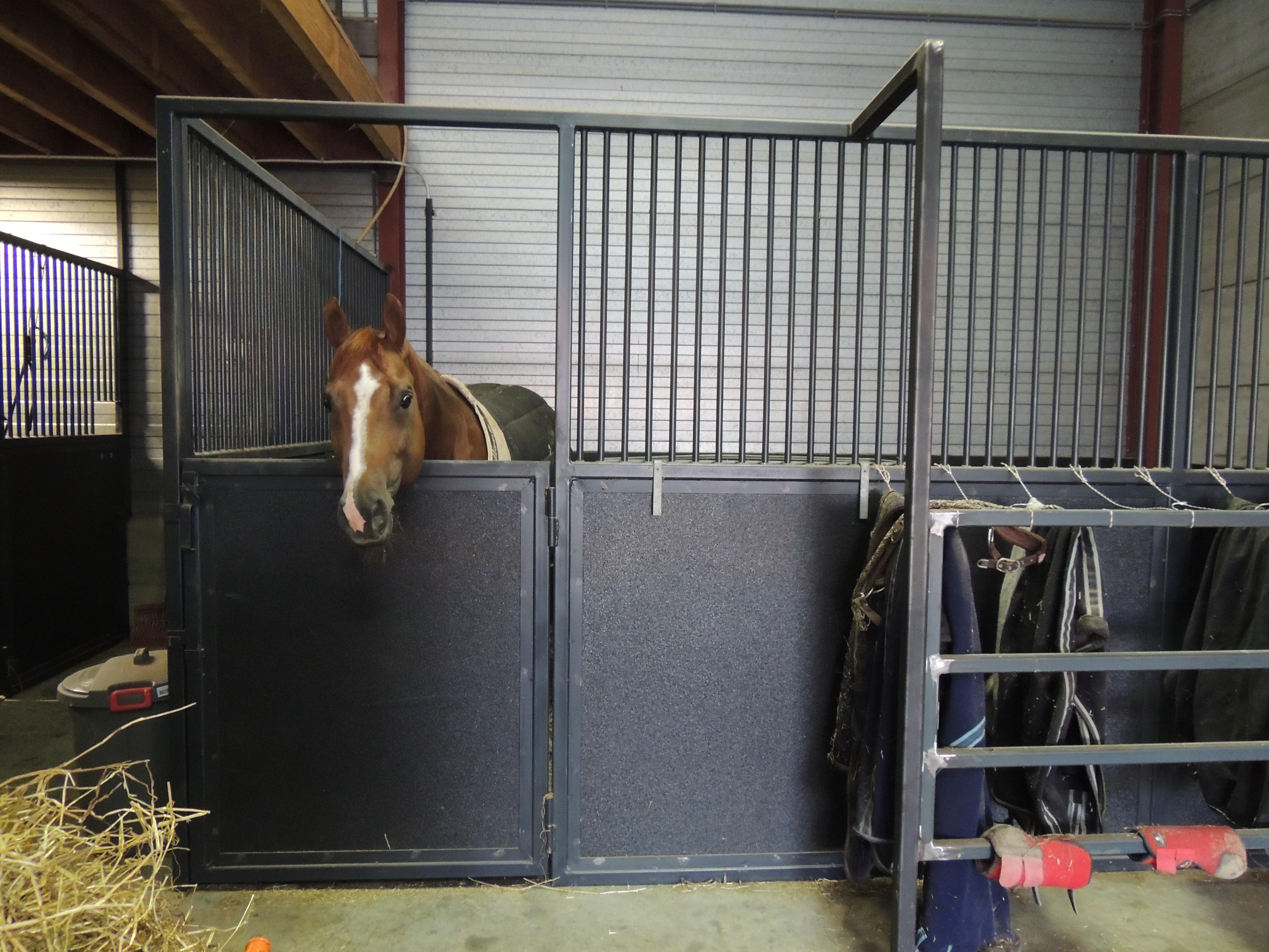 Wandpanelen Voor Douche : Wandpanelen aspu horsesafe